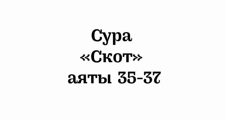Сура «Скот»: аяты 35-37